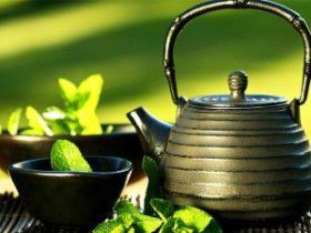 Tầm quan trọng của thảo dược và sức khỏe